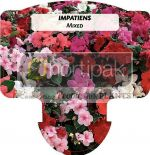 Impatiens Mixed