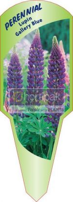 Lupin Gallery Blue