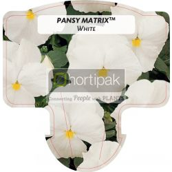 Pansy Matrix™ White