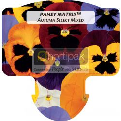 Pansy Matrix™ Autumn Select Mixed