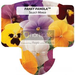 Pansy Panola ™ Select Mixed