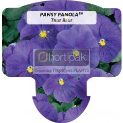 Pansy Panola ™ True Blue