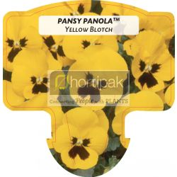 Pansy Panola ™ Yellow Blotch