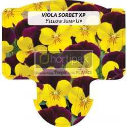 Viola Sorbet XP Yellow Jump Up