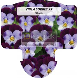 Viola Sorbet XP Denim