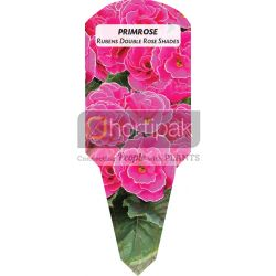 Primrose Rubens Double Rose Shades