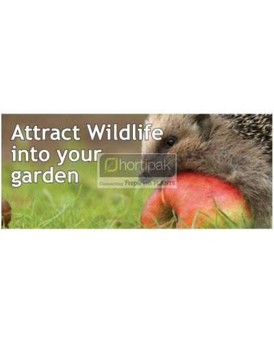 Attract Wildlife into your garden