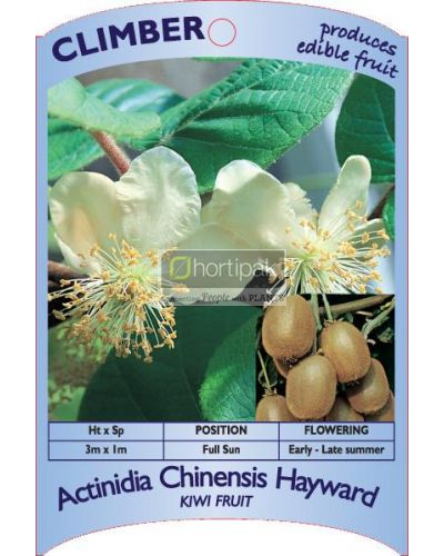 Actinidia chinensis Hayward (Kiwi Fruit)