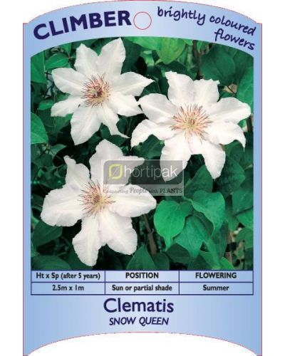 Clematis Snow Queen