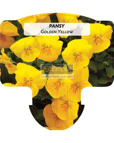 Pansy Golden Yellow