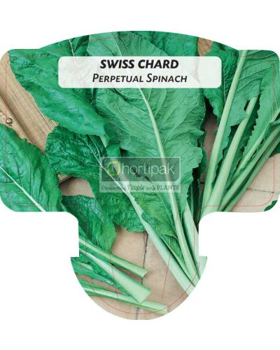 Swiss Chard (Perpetual Spinach)