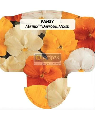 Pansy Matrix Daffodil Mixed