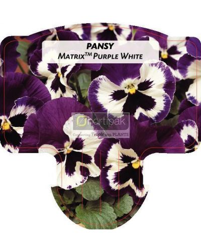 Pansy Matrix Purple White