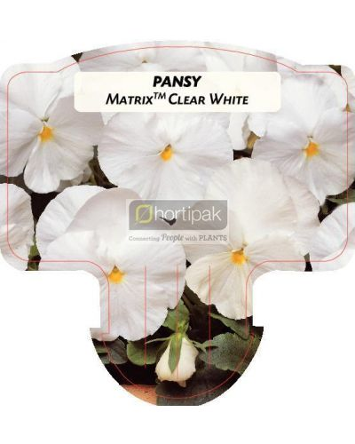 Pansy Matrix Clear White
