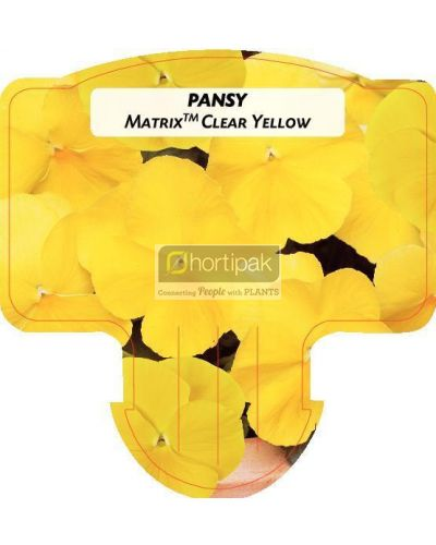 Pansy Matrix Clear Yellow