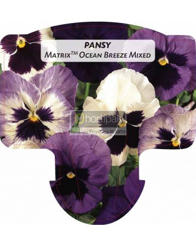 Pansy Matrix Ocean Breeze