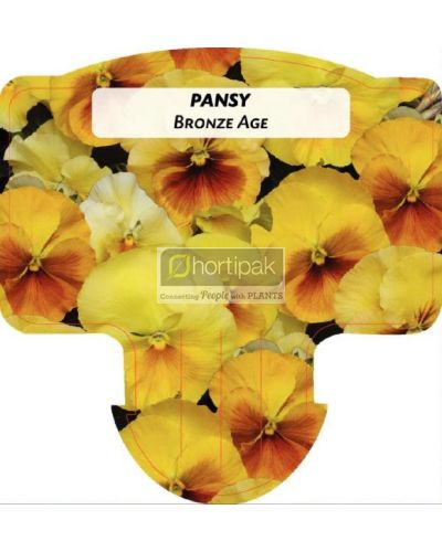 Pansy Bronze Age