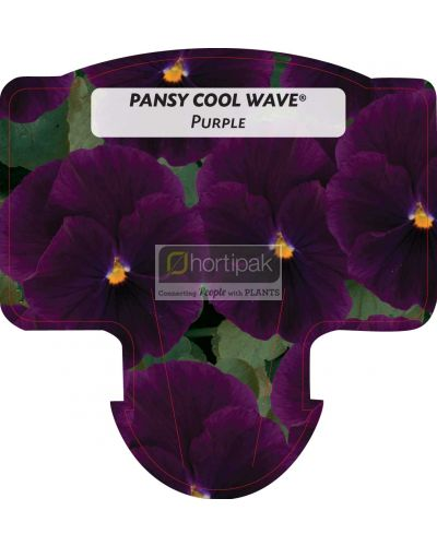 Pansy Cool Wave Purple
