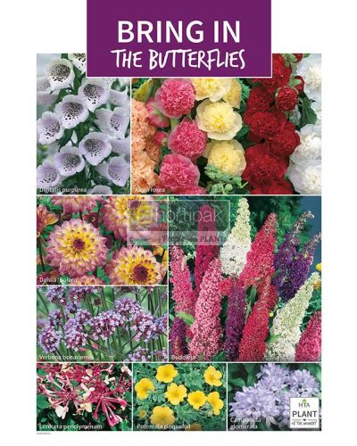 HTA Plant of the Moment July Bring in the Butterflies Poster