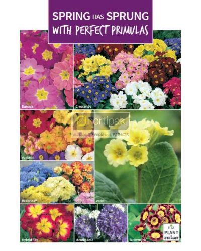 HTA Plant of the Moment March Perfect Primulas Poster