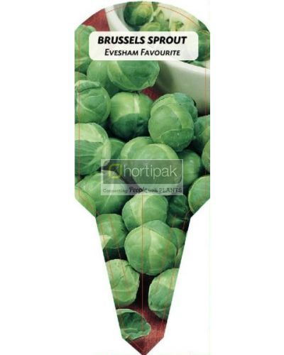 Brussels Sprout Evesham Favourite