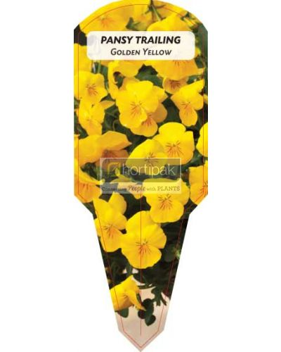 Pansy Trailing Golden Yellow