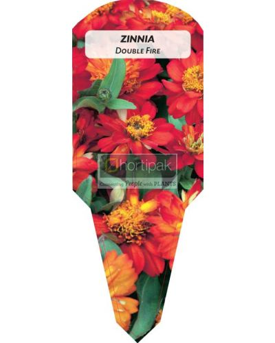 Zinnia Double Fire