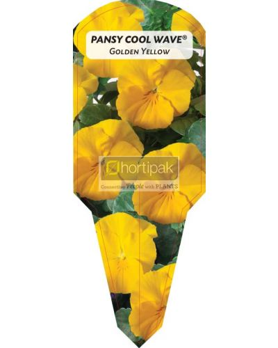 Pansy Cool Wave ® Golden Yellow