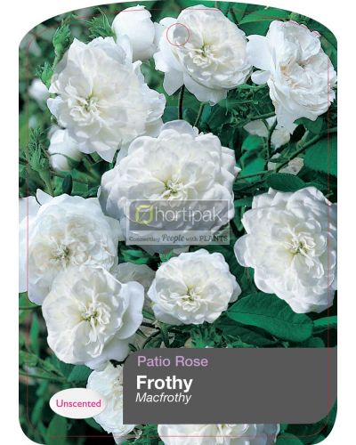 Frothy - 'Macfrothy'