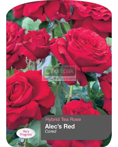 Alec's Red - 'Cored'