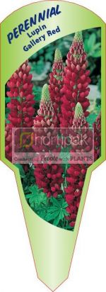 Lupin Gallery Red