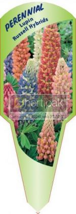 Lupin Russell Hybrids (Mixed)