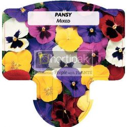 Pansy Mixed