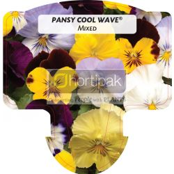 Pansy Cool Wave Mixed