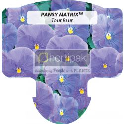 Pansy Matrix™ True Blue