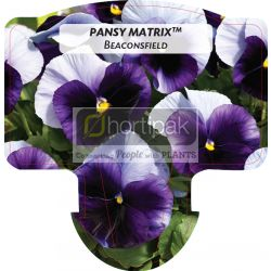 Pansy Matrix™ Beaconsfield
