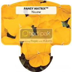 Pansy Matrix™ Yellow