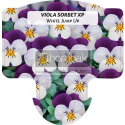 Viola Sorbet XP White Jump Up