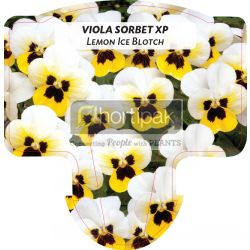 Viola Sorbet XP Lemon Ice Blotch