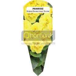 Primrose Rubens Double Light Yellow