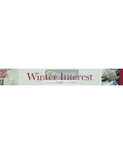 Winter Interest