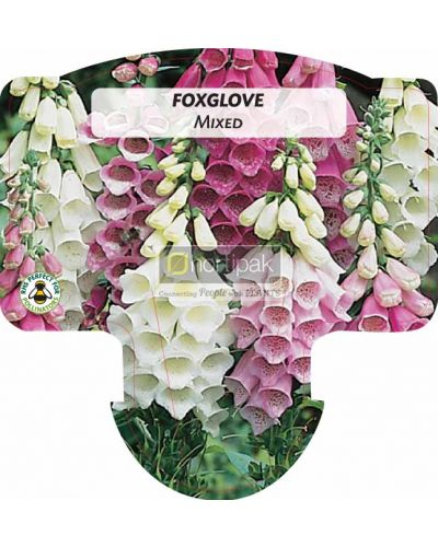 Digitalis, Foxglove Mixed