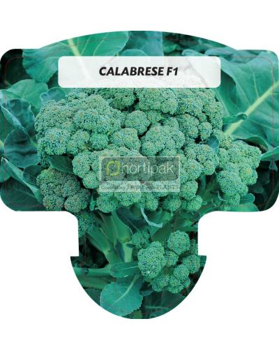 Calabrese F1