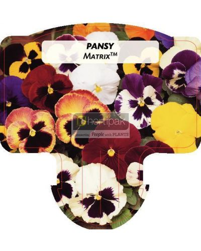 Pansy Matrix (Mixed)