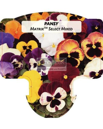 Pansy Matrix Select Mixed