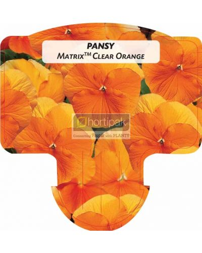 Pansy Matrix Orange