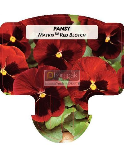 Pansy Matrix Red Blotch