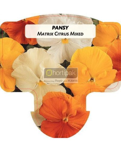 Pansy Matrix Citrus Mixed