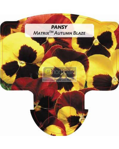 Pansy Matrix Autumn Blaze Mixed