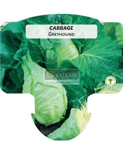 Cabbage Greyhound (Pointed)